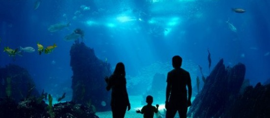Aquarium Saint Malo Le grand aquarium de Saint Malo