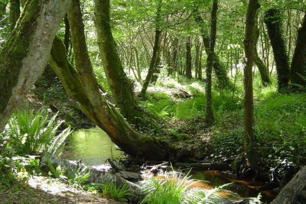 Forêt des Elfes La Forêt des Elfes